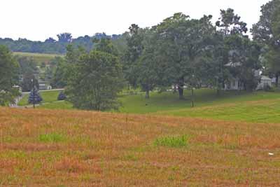 Grassland Restoration