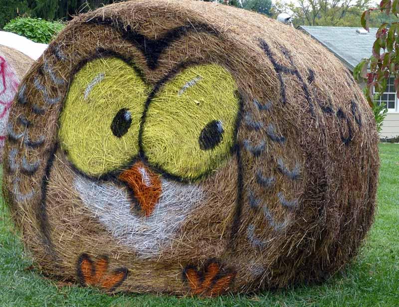 Halloween Hay Owl