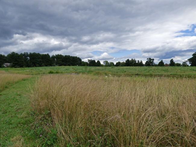 Dark Clouds over Meadow