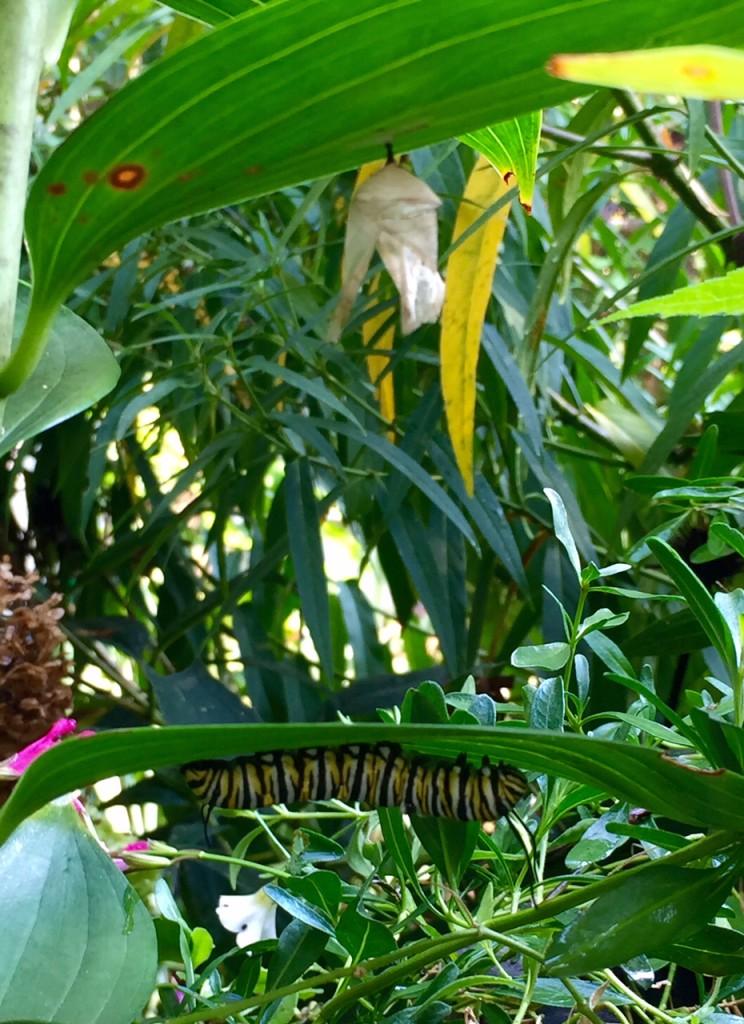 Caterpillar under leaves