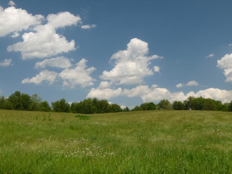 Native Grasslands Creasey Mahan Nature Preserve